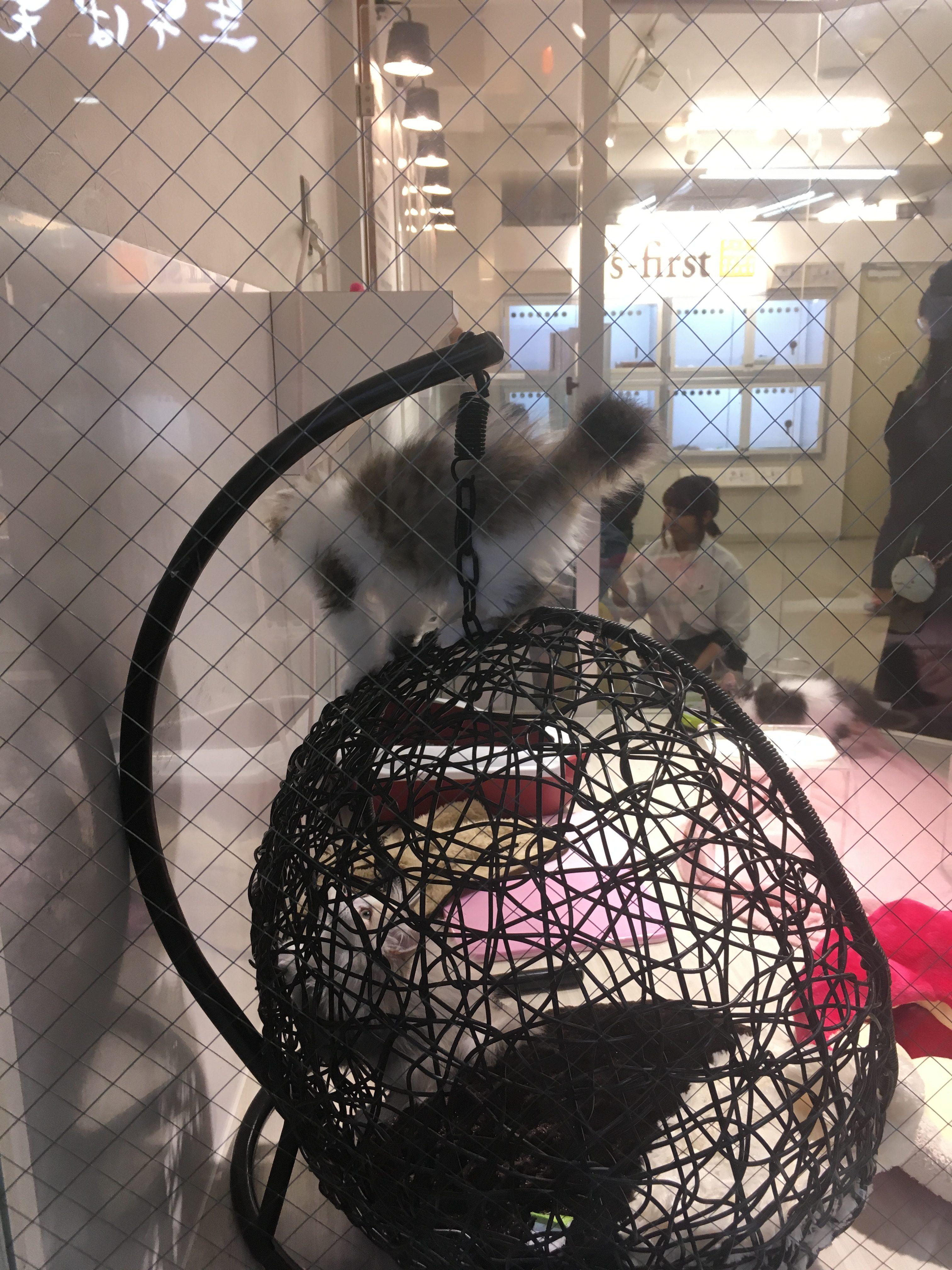 Tiny Rabbit Hole – Puppy Yarn Amigurumi Crochet Shop Tokyo Japan Knitting European Katia